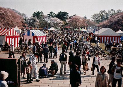 小金井公園のさくら祭り1