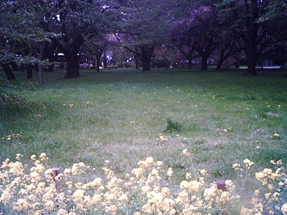 菜の花とたんぽぽ