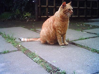 公園の野良猫