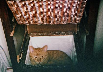 洗濯かごの中のねむたいマロン