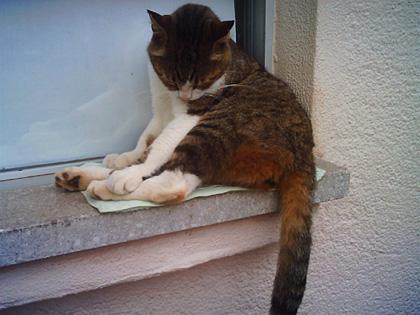 江ノ島の猫4