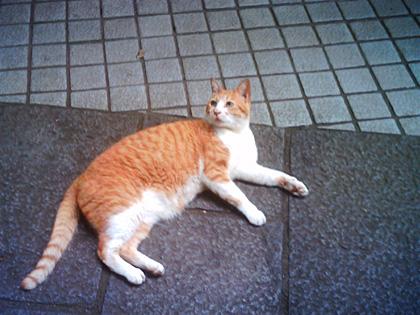 江ノ島の猫5