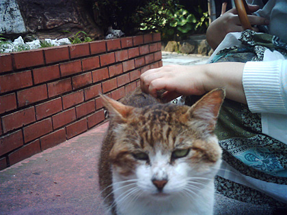 江ノ島の猫6