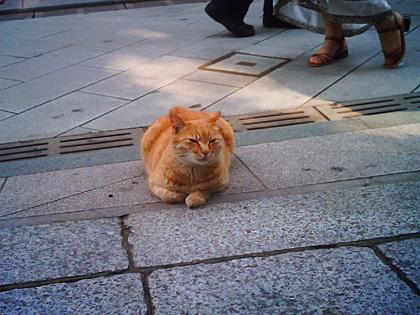江ノ島の猫7