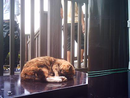 江ノ島の猫3