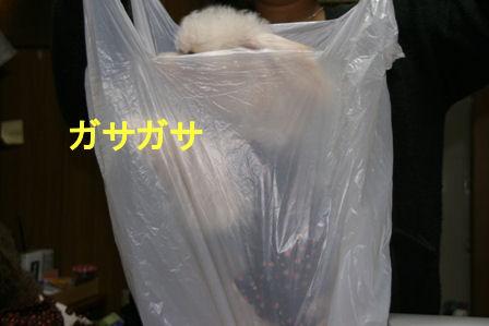 IMG_3214d