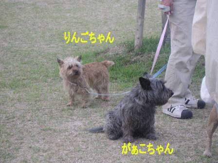 IMG_3862d.jpg
