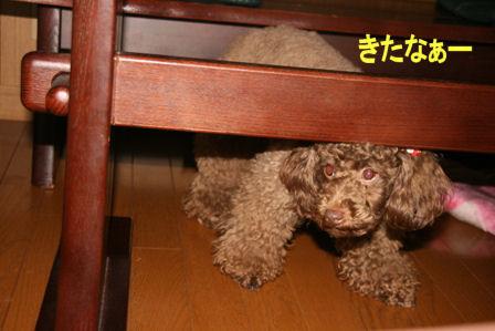 IMG_3931b.jpg