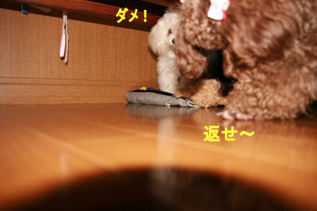 IMG_4180b.jpg