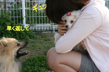 IMG_4529b.jpg
