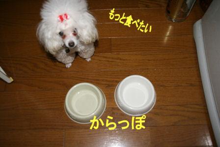 IMG_5045b.jpg