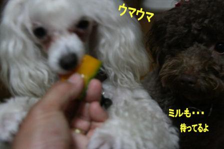 IMG_5168B.jpg
