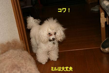 IMG_6257b.jpg