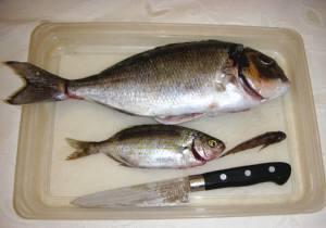 ツーロンの魚チヌPICT0004