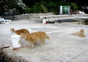 船着き場で待つネコたち
