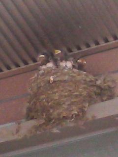 親鳥を待つ小鳥たち