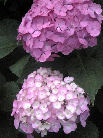 008-2.jpg