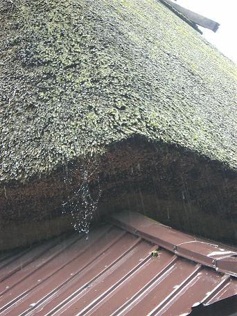 民家クモの巣2