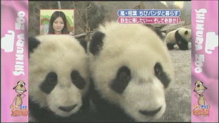 [TV] 20080412 zoo  SP (1h33m47s)[(095792)14-06-16]