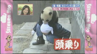 [TV] 20080412 zoo  SP (1h33m47s)[(096953)14-07-19]