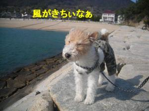 風がきつい