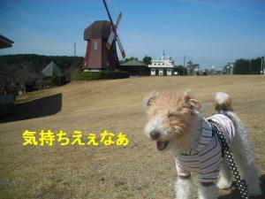 コピー ~ DSCN8168