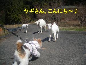 コピー ~ DSCN8195
