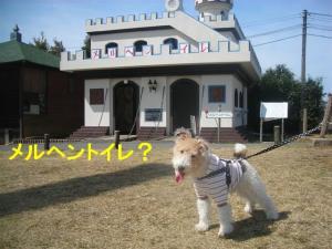コピー ~ DSCN8212