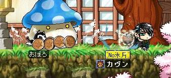 Maple0011ggg.jpg
