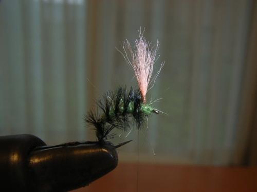 caterpillar4.jpg
