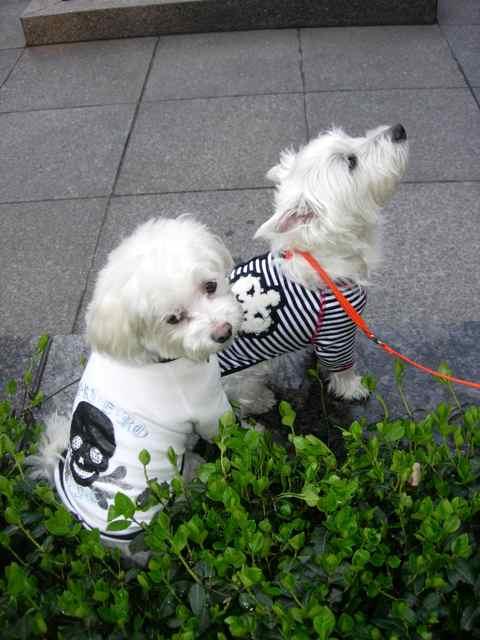 愛犬ルンバとお友達のクリスティー