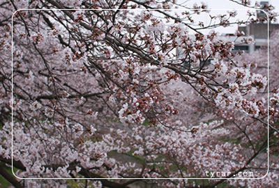 200803304.jpg