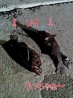 F1000347_20080219194254.jpg