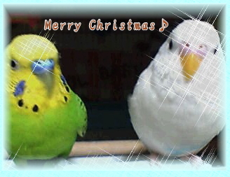cristmas.jpg