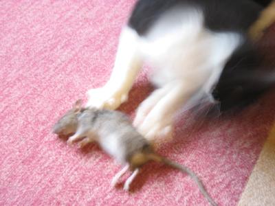 大きいネズミ