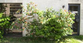 sakurannbo200508a.jpg