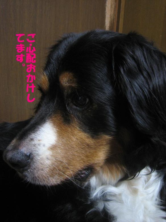 goshinnpai1