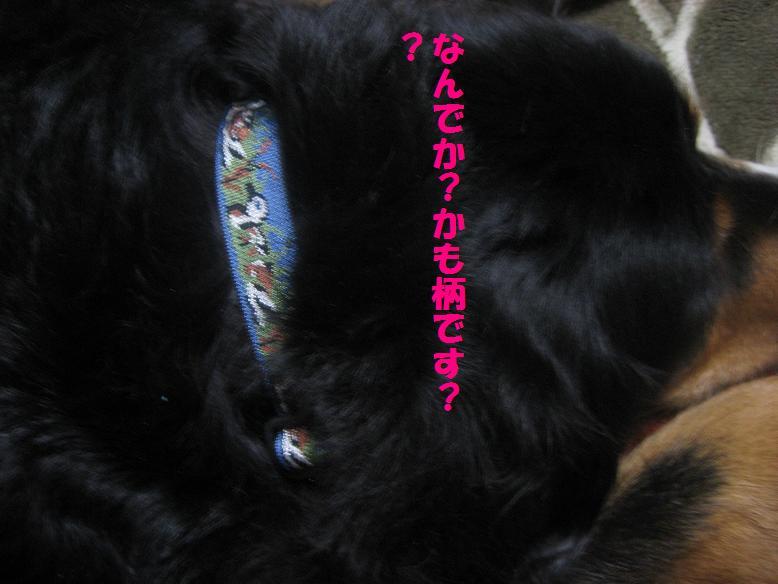 goshinnpai3