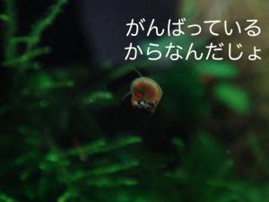 DSC01690c.jpg