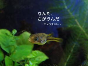 DSC01921c.jpg