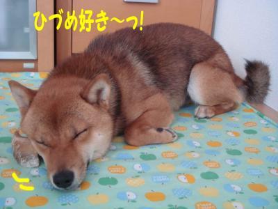 ひづめと寝んね