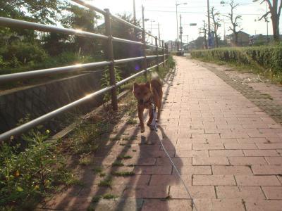 夕方のお散歩に出発!