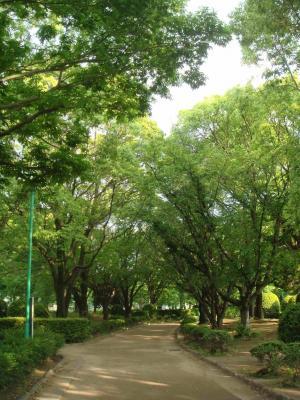 いつもの公園1