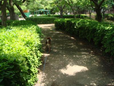 いつもの公園2