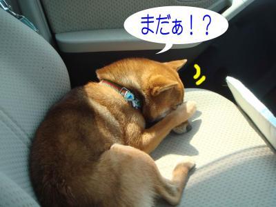 どこへ行くのかなぁ?2
