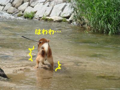 お水に入っちゃおうかな!?2