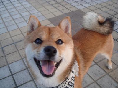 満面の笑顔のうめ吉