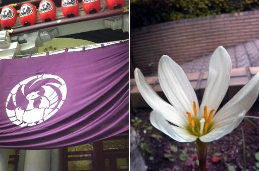 P10歌舞伎座