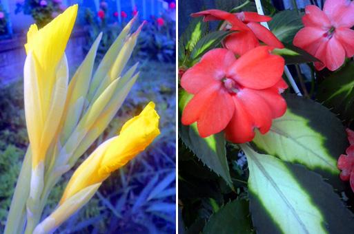 05P10二色の葉と赤