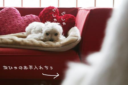3_27_6229.jpg